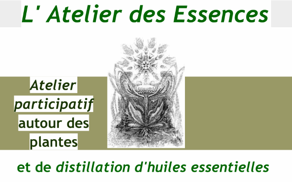 Dimanche 18 Novembre 15h – Atelier distillerie plantes